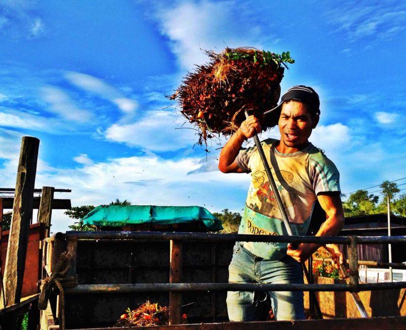 A worker unloading Palm oil fruit